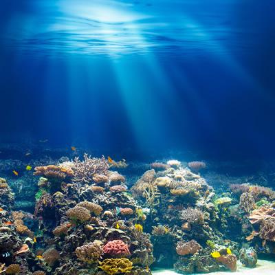 海に潜って見える景色